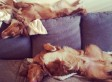 This Adorable Dog Sleeps and Plays In Some Really Interesting Positions (PHOTOS)
