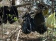 Dead Cats In Yonkers, New York Tree Were Ritualistically Arranged