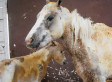 Pony Literally Stands In Line Of Fire To Save Foal, Proving There's No Limit To Mother-Baby Bond