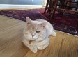 Arrow The Cat Is Blind, Full Of Buckshot (Or BBs) -- And Finally Happy
