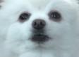 This Dog Deserves An Oscar For His Heartbreaking Monologue