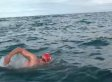 This Swimmer Noticed A Shark Was Following Him; The Dolphins Noticed, Too