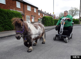 Yes that IS A Woman Exercising Her Miniature Horse Via A Mobility Scooter (PICTURES)