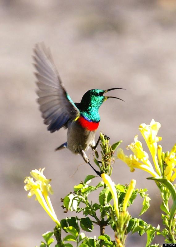 blumen safari fynbos
