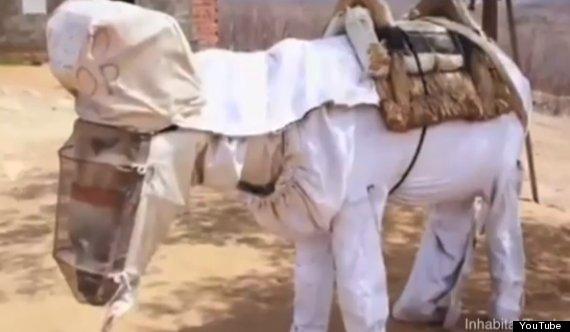 beekeeping donkey boneco