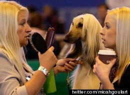 12 Crufts Dogs Who Look Like Their Owners