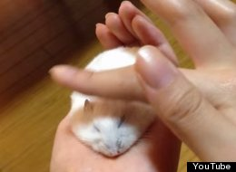 How To Make A Hamster Thinner