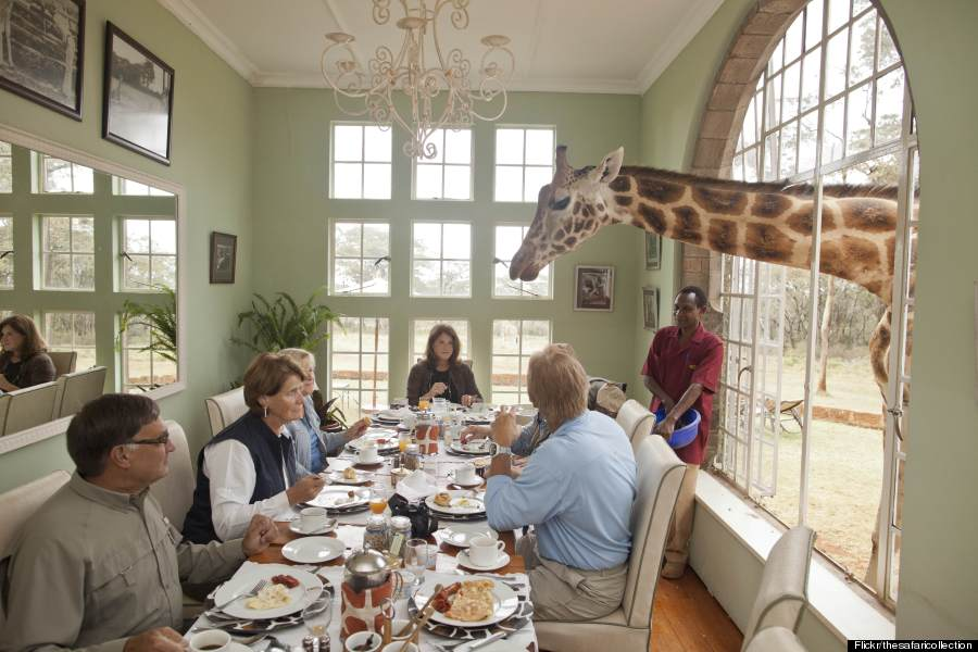 This Is The World S Only Giraffe Hotel Huffpost