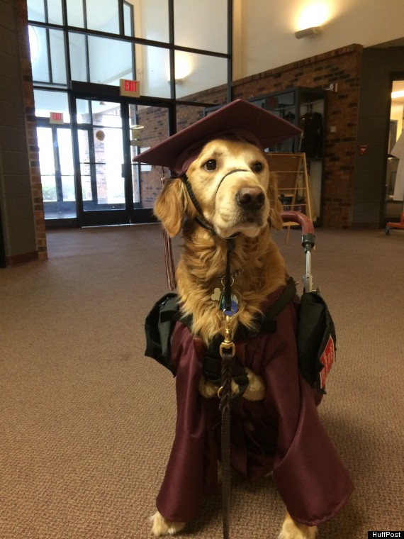 Loyal Service Dog Dons Cap And Gown To Join 17 Year Old At Her High