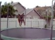 Animals Goofing Off On Trampolines, Need We Say More?