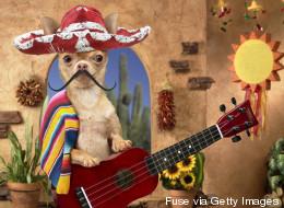 15 mascotas que celebran Cinco de Mayo mejor que tú