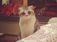 That Moment When Taylor Swift's Cat Attacked Her Met Ball Gown
