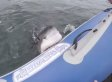Shark Mistakes Inflatable Boat For Chew Toy (VIDEO)