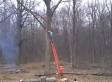 Tree Trimming Gone Wrong As Falling Branch Knocks Man Off Ladder (VIDEO)