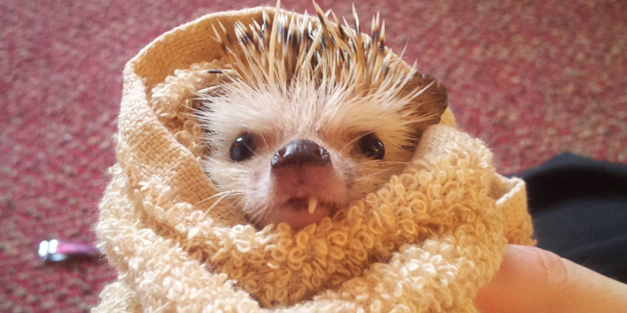 hedgehog bath Book Covers