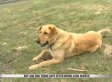Loyal Dog Protects Missing Boy By Refusing To Leave His Side