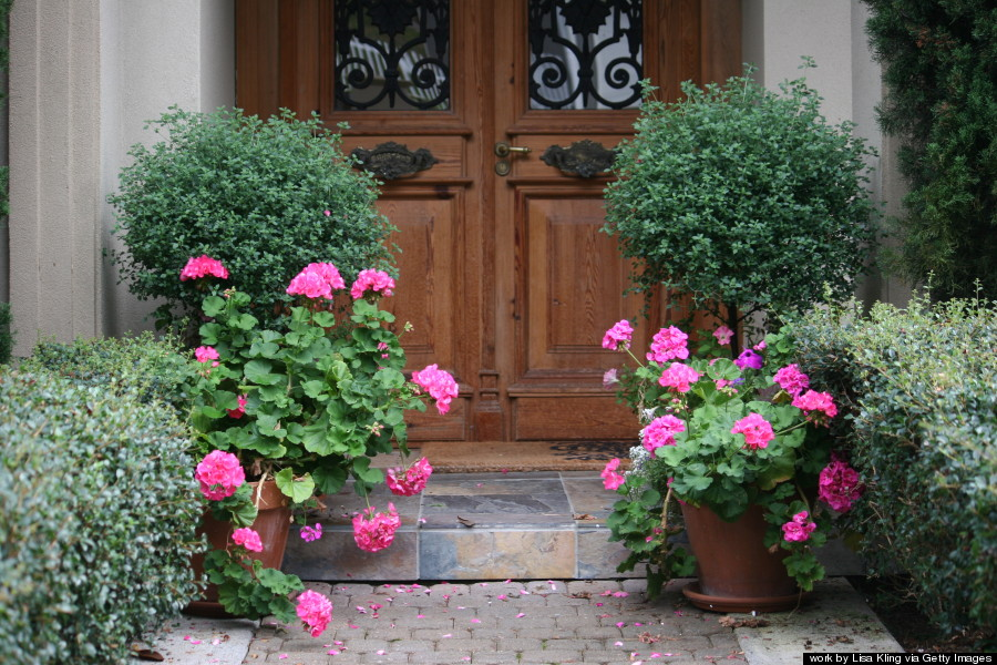 potted plants entryway