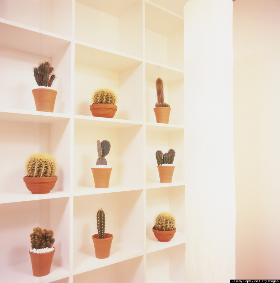 potted cacti garden