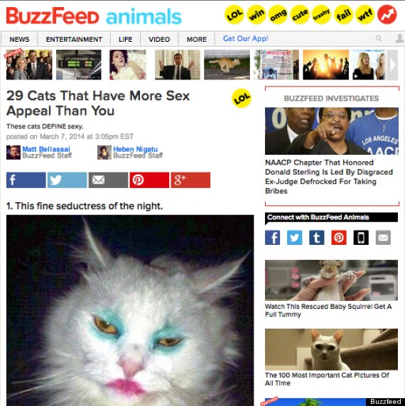 buzzfeed cats list