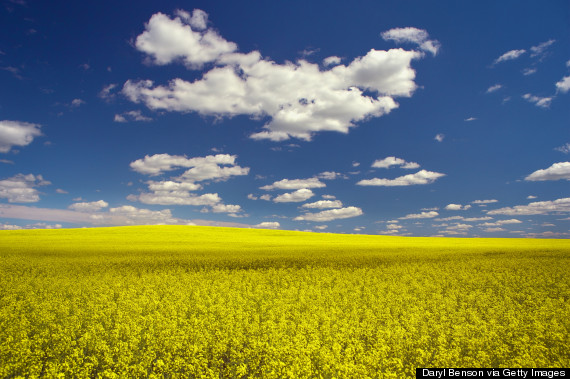 beautiful field saskatchewan