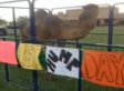 Awesome Senior Prank Brings Camel To School For 'Hump Day'