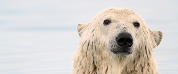 POLAR BEARS DIET