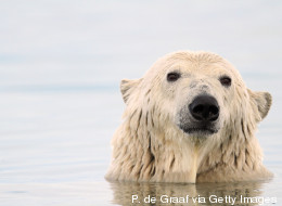 No White Bears: How to Turn off Your Brain When it Counts