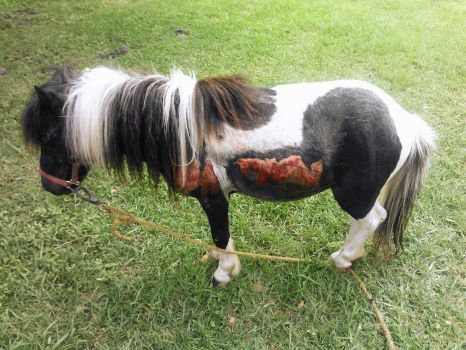 Man Allegedly Dragged Pony Behind Truck Graphic Photo