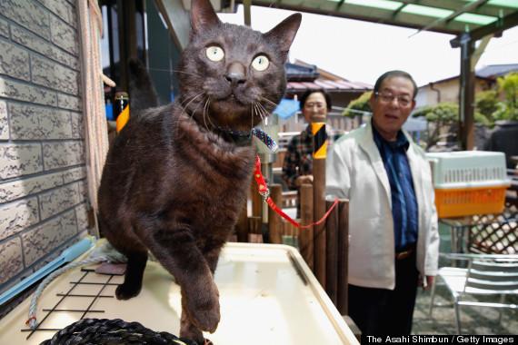 tsunami cat