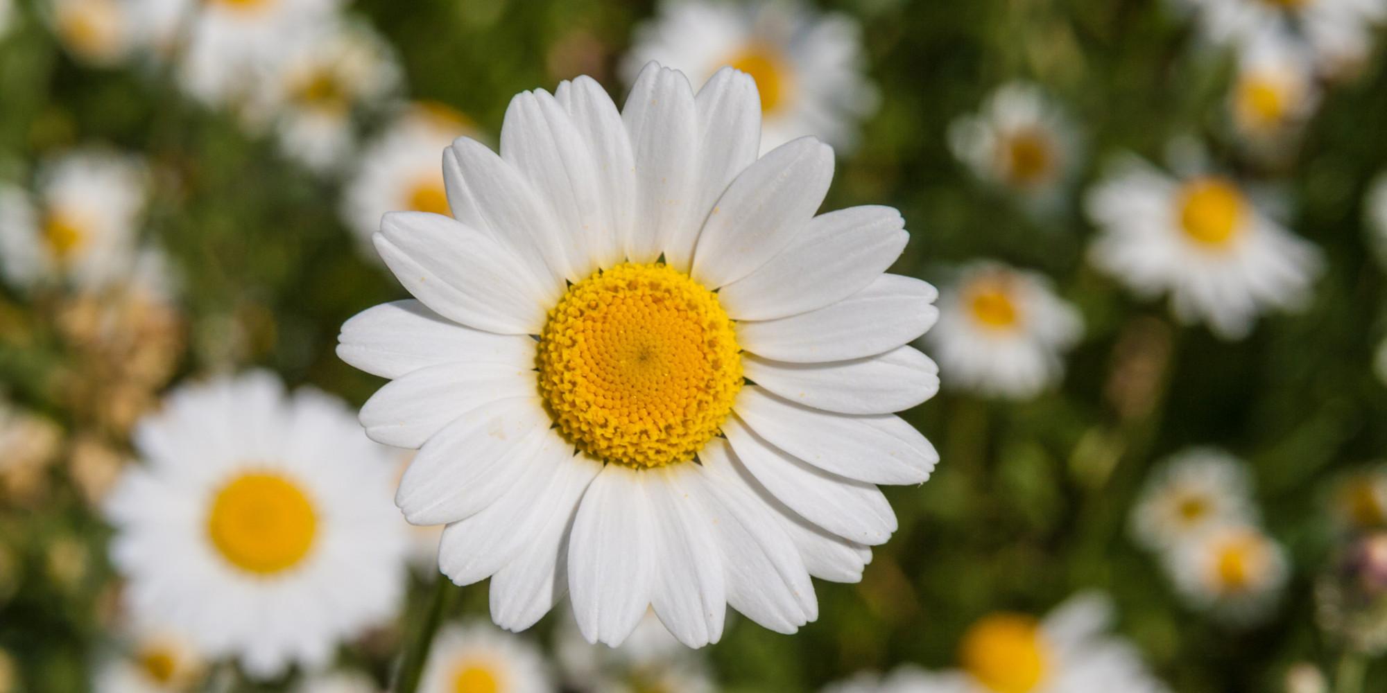 Plantas y hierbas para mejorar la calidad de vida huffpost - Plantas para la buena suerte ...