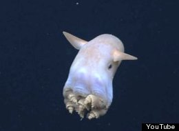 WATCH: Adorable 'Dumbo' Octopus Proves Deep Sea Creatures Aren't Always Creepy