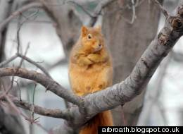 Judgemental Squirrel Is Judging You