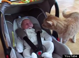 WATCH: What Happens When A Cat Meets A Baby For The First Time? This