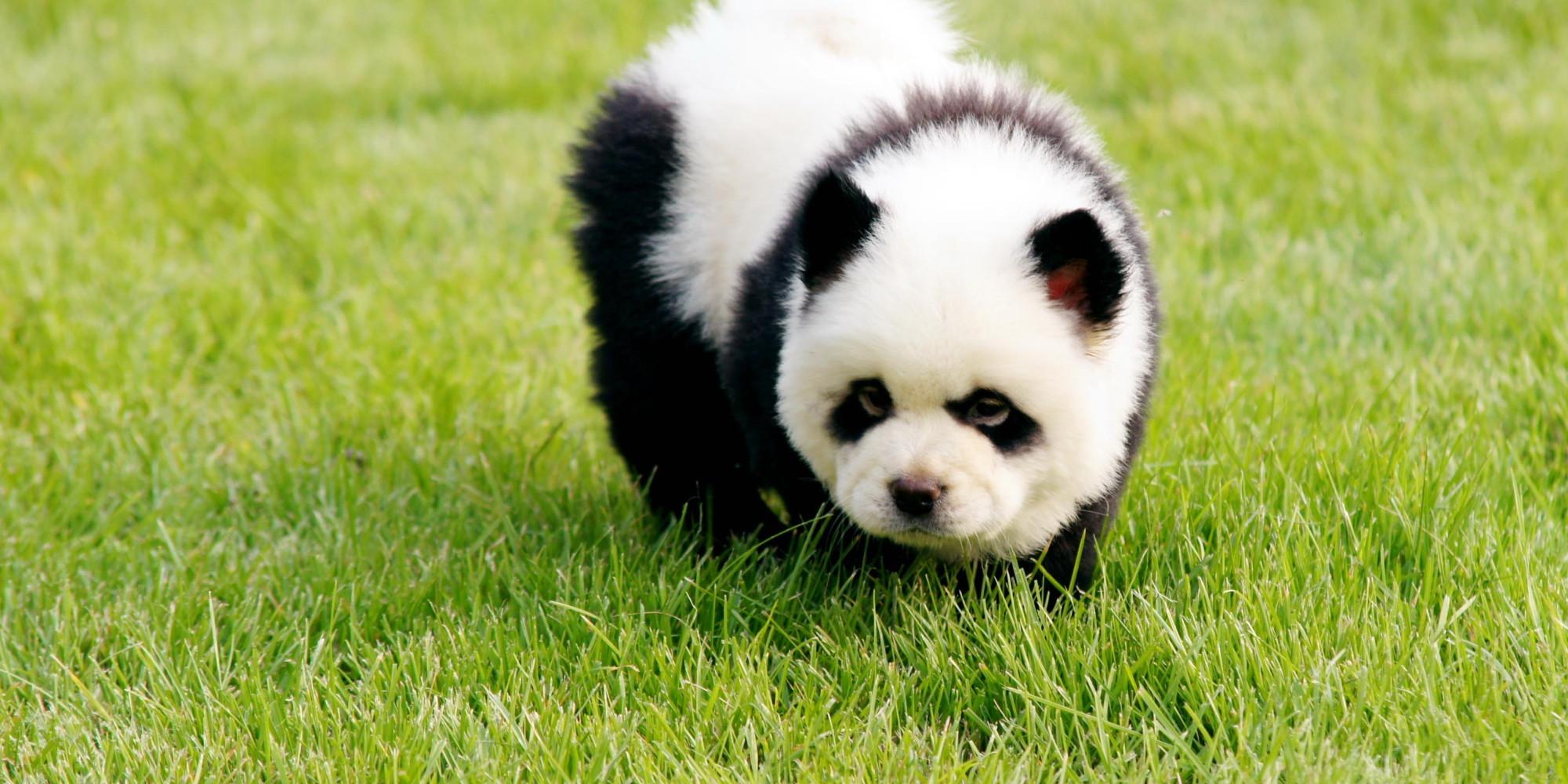die pandas