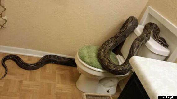 python in toilet