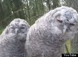 WATCH: These Baby Owls Are Awesome