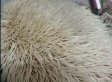 Shhh, Don't Wake Up This Adorable Snoring Hedgehog