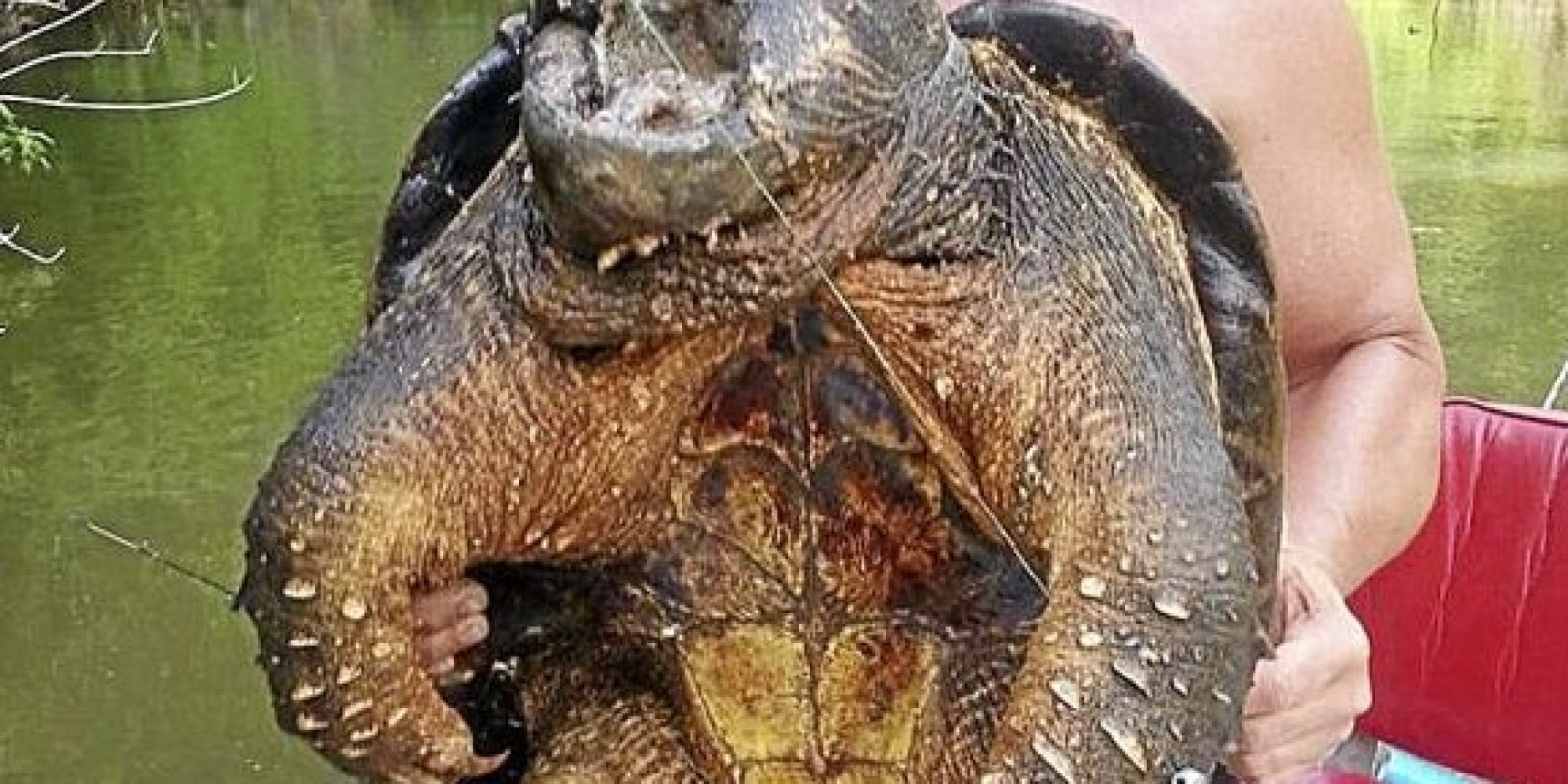 Alligator Snapping Turtle Tattoos O-giant-turtle-facebook.jpg