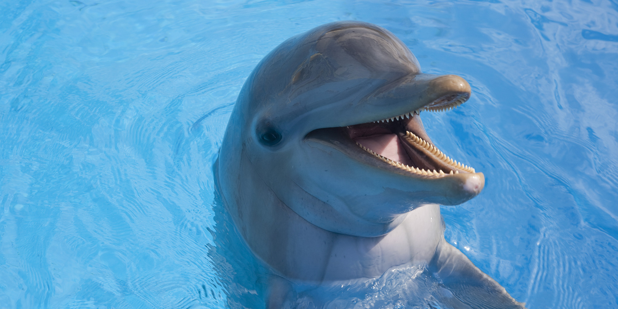 National Aquarium Considers Scrapping Dolphin Exhibit, Citing Concerns ...
