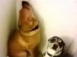 These Guilty Dogs Know Exactly What They Did, But We Love Them Anyway (VIDEO)