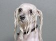 Photo Series Captures The Endearing Misery Of Dogs At Bath Time