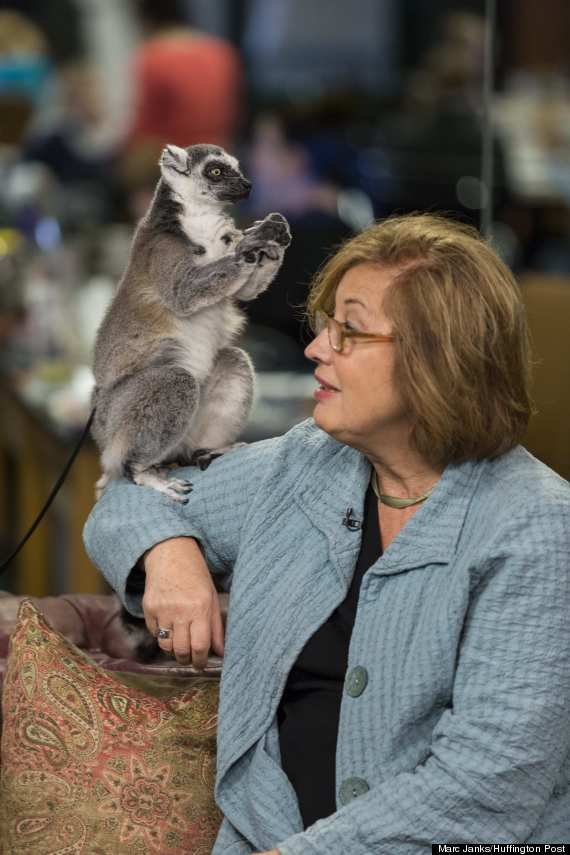 lemurs4