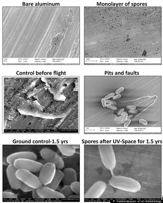spacecraft microbes