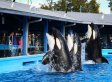 SeaWorld 'Disappointed' After Travel Company STA Ends 'Unethical' Animal Trips