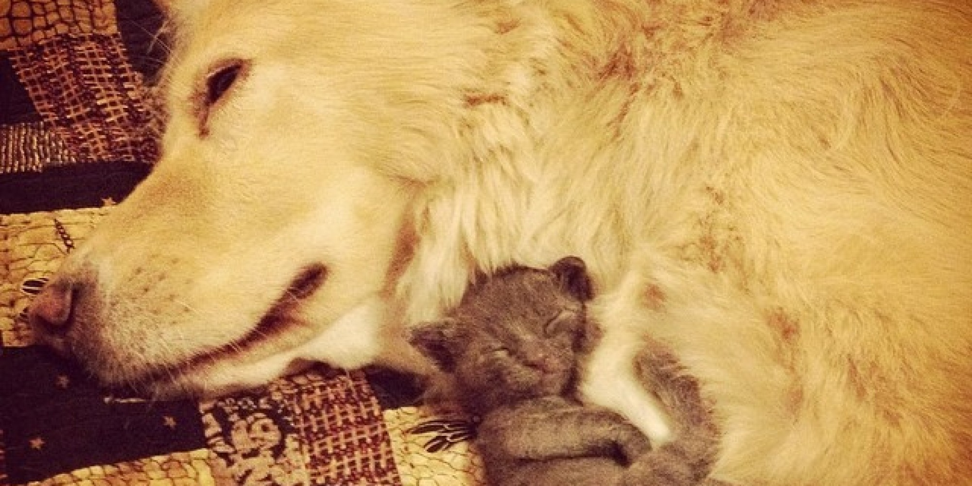 All The Kittens Want To Hug This Amazing Dog Huffpost