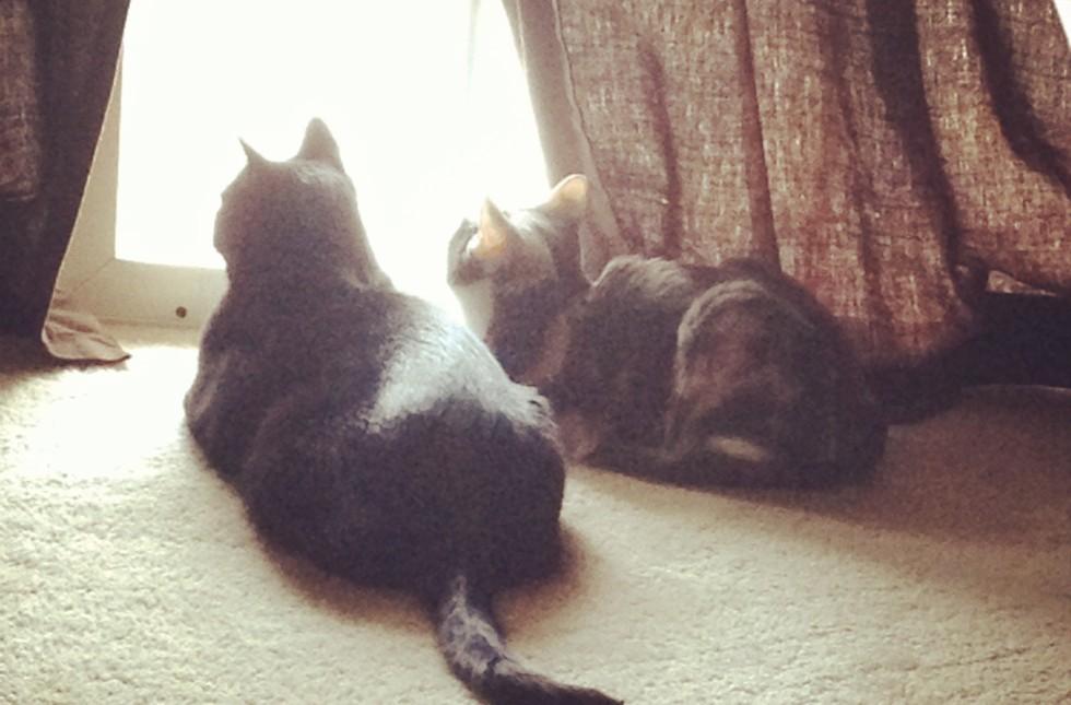 cats bird watching