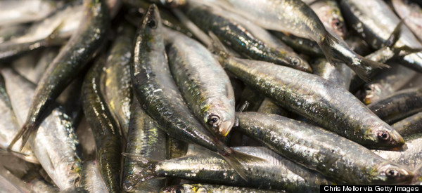 No, Anchovies Are Not Always Salt-Cured