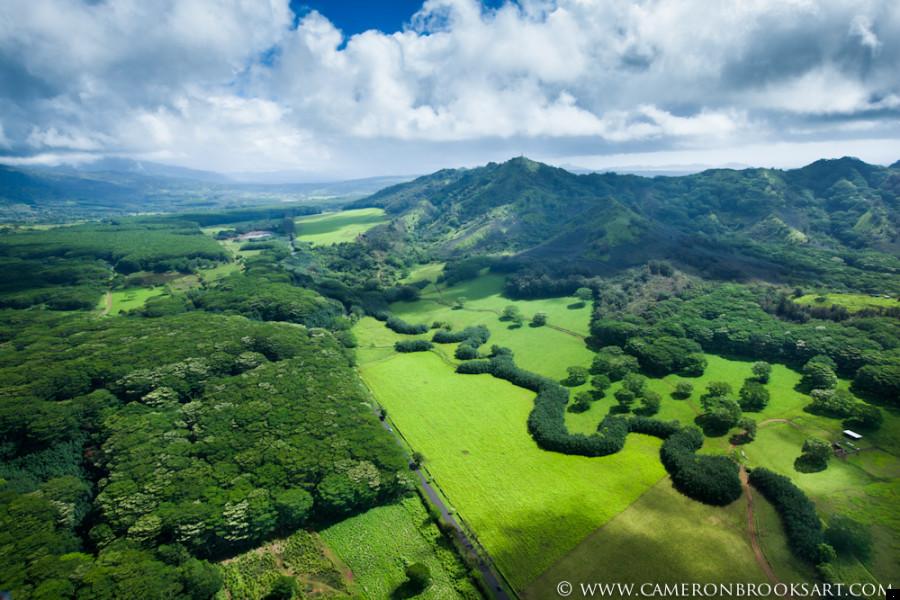 really green - The Garden Island