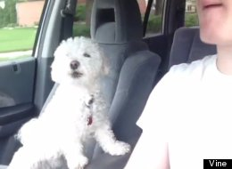 This Dog REALLY Loves Road Trips