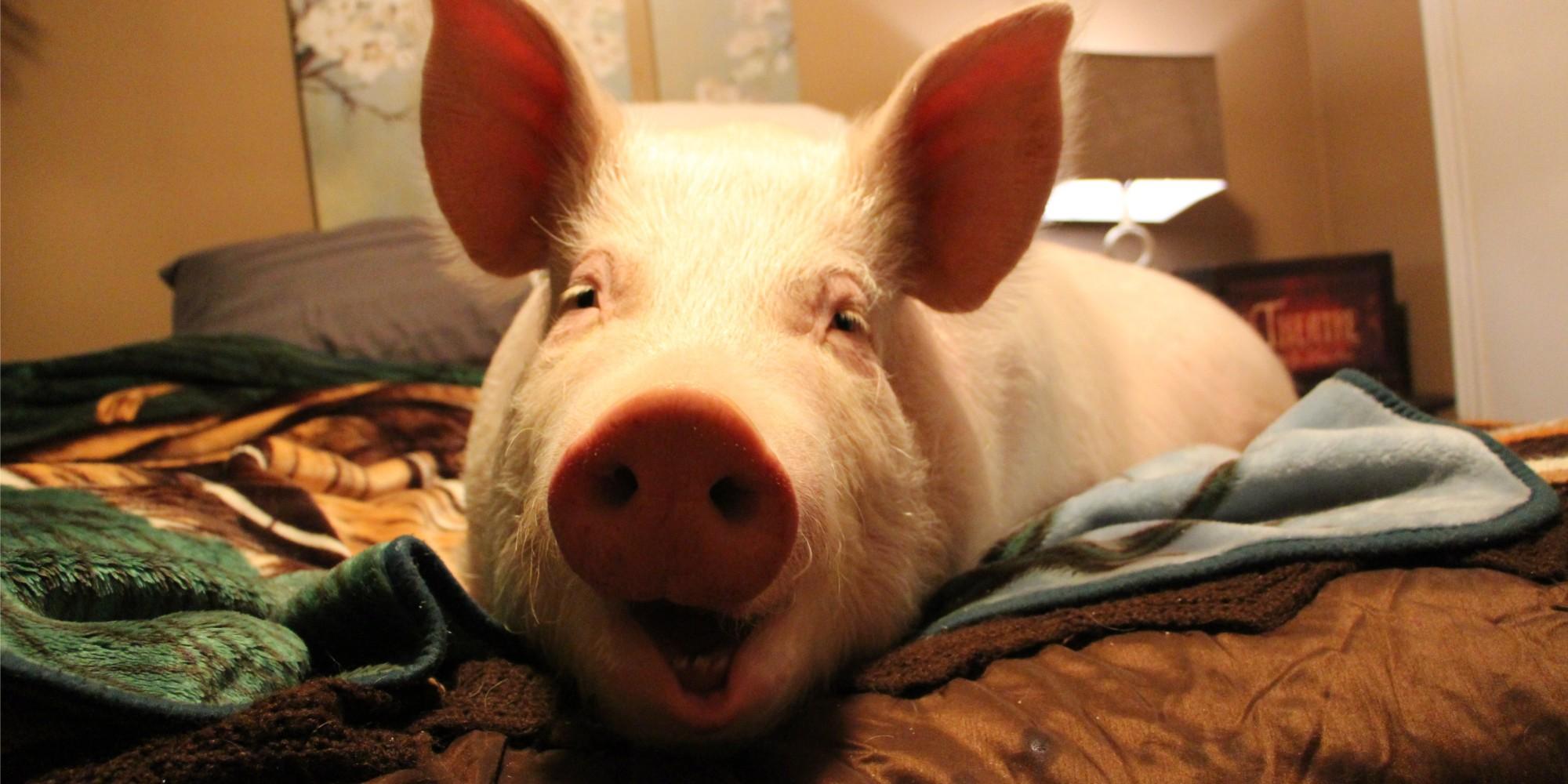 Risultati immagini per esther the wonder pig